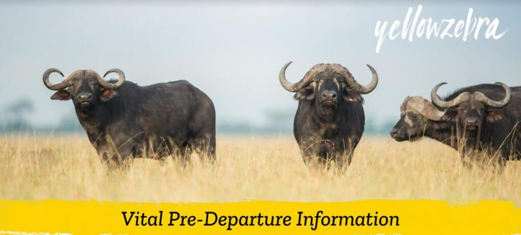 safari in kenya pre-departure information