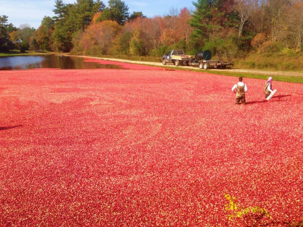 cranberry bog - places to visit in New England