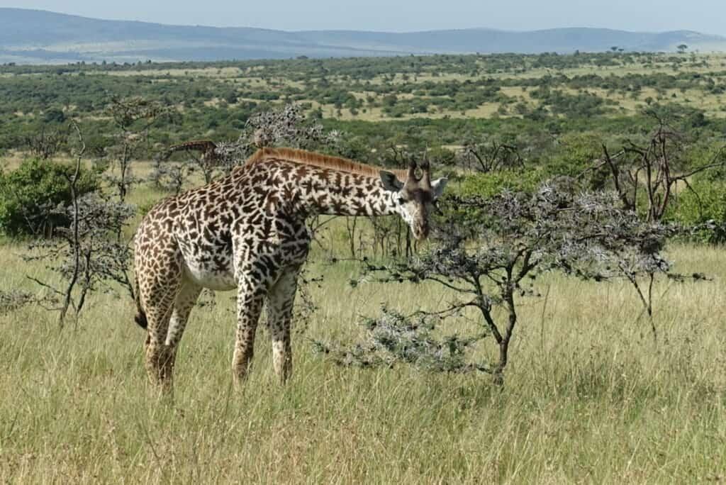 safari terms
