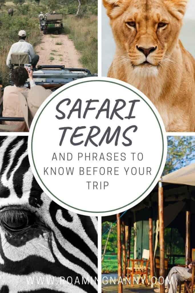 To help you feel more prepared for your African Safari I've compiled this list of all the safari terms and phrases you'll need to know.